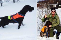 Årets vinterhunder i NVC 2015