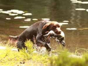 KM Fugleskogens Jax på vannapporten. Foto: Thomas Svendsen