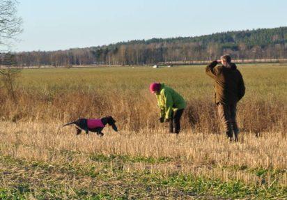 Blixen og Signe - apport etter fuglearbeid