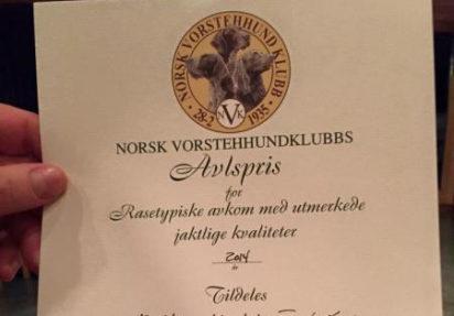Husk å nominere til NVKs priser for avl, oppdrett og utstilling