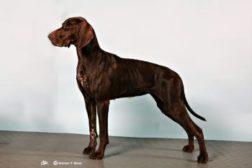 Årets hunder 2012