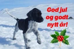 Julehilsen fra NVK