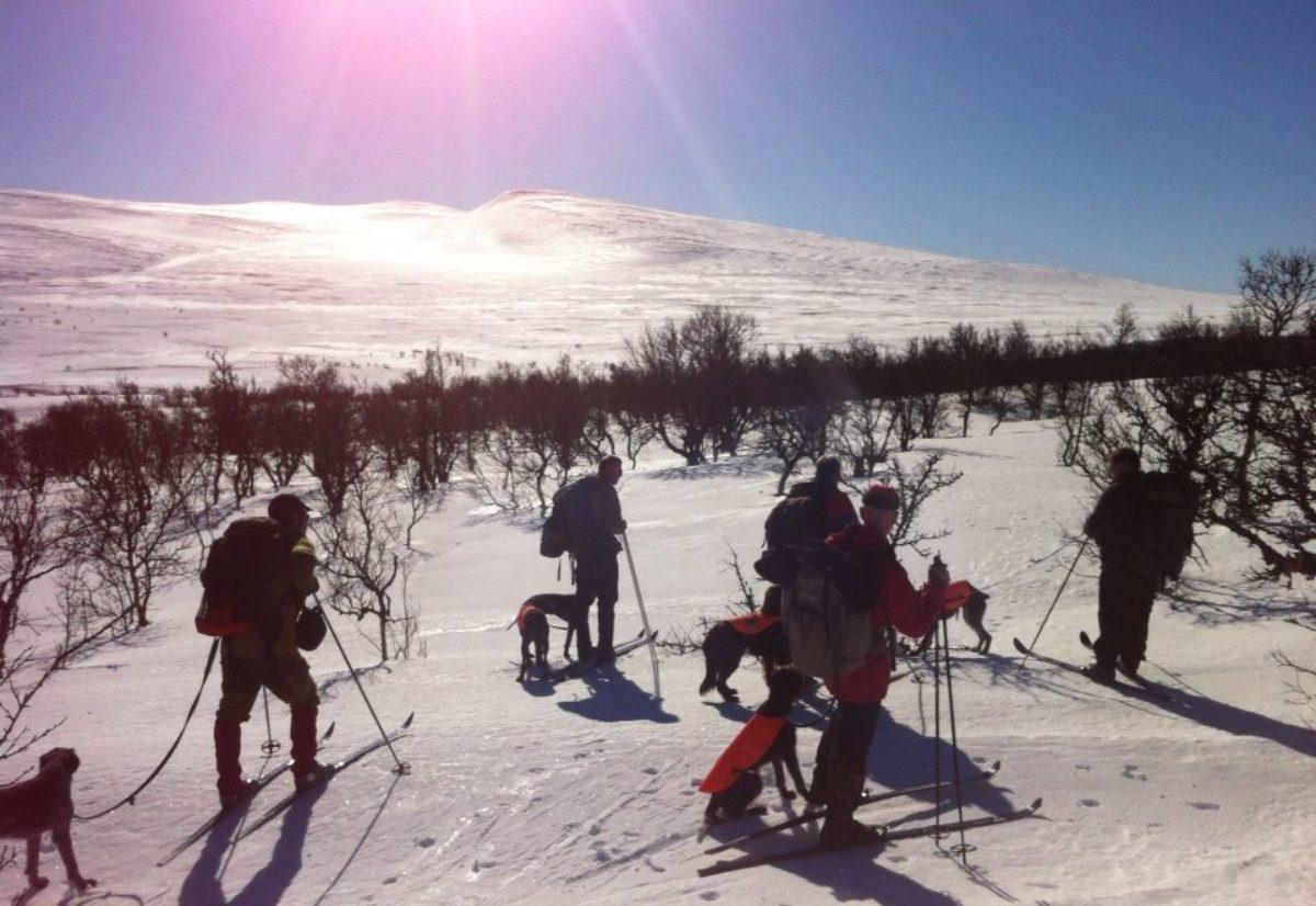 Vinjevegen – Vinterens vakreste eventyr!