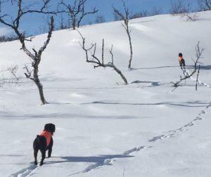 Nemi og Siivo vinter