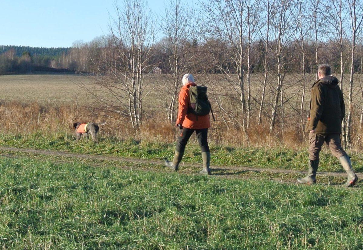 Dyrere jaktprøver