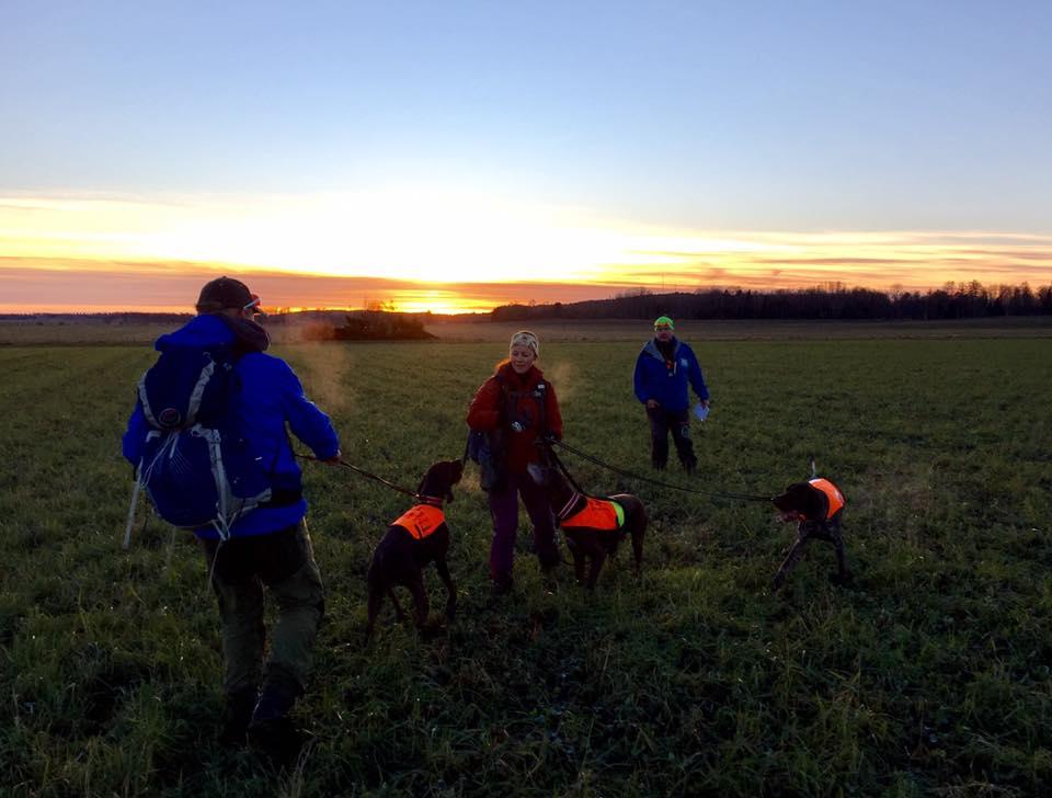 Lisbet Ottesen med 3 hunder, i kveldssol på Trossnäs, nov 2016. Bak dommer Thomas Engh, til venstre leif Ottesen, handler