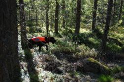 Finaledommere klare til NM skog!