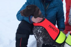 Masse premierte vorstehhunder i helga
