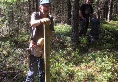 Ole Kristian Hesthagen og Anders Simensrud på gjerdedugnad på Holleia
