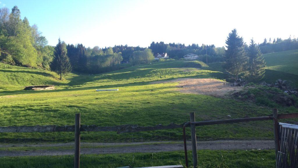 Jorde med sauer på gården til Jon Sand i Lier Foto: SKH
