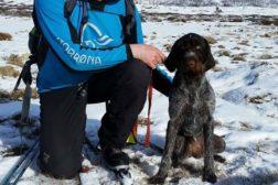 Årets vinterhunder 2018 i NVC er kåret