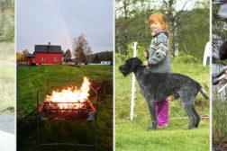 Program for landssamling 2017 på Buhol i Akershus