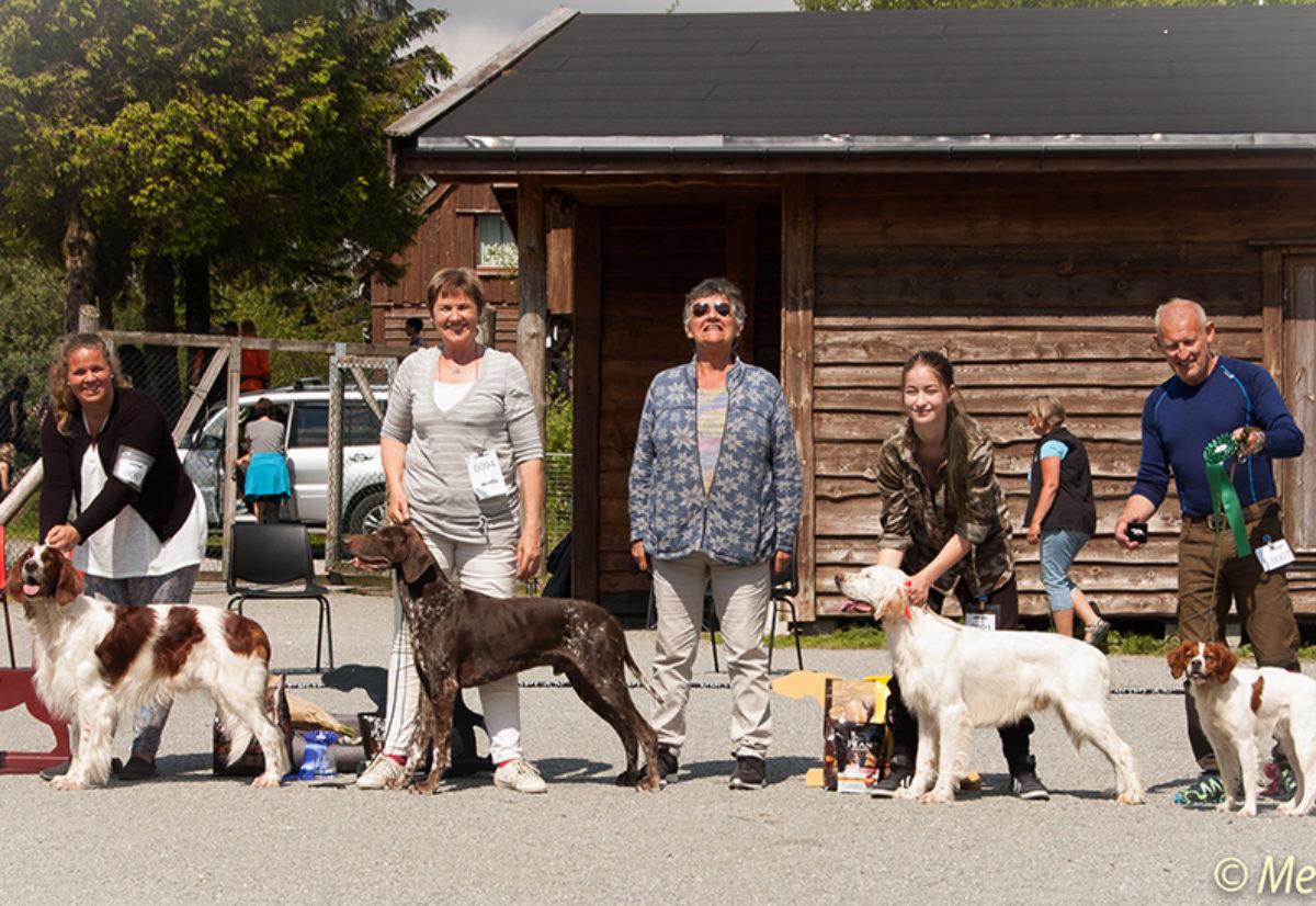 KV Lucius BIS2 på Vestlandets Fuglehundfestival