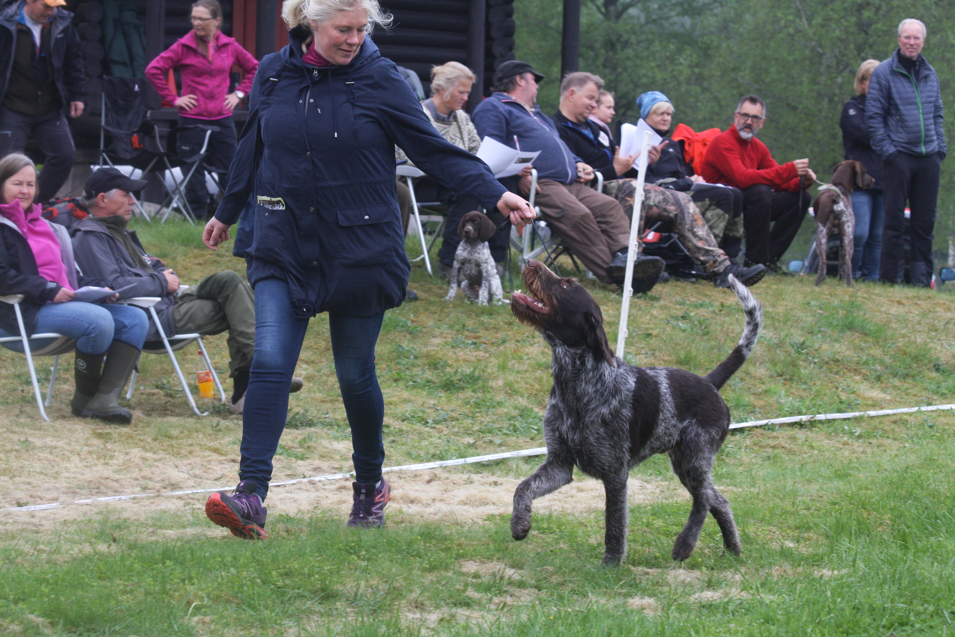 Hildee Børdalen og Pitkän Fåx i ringen