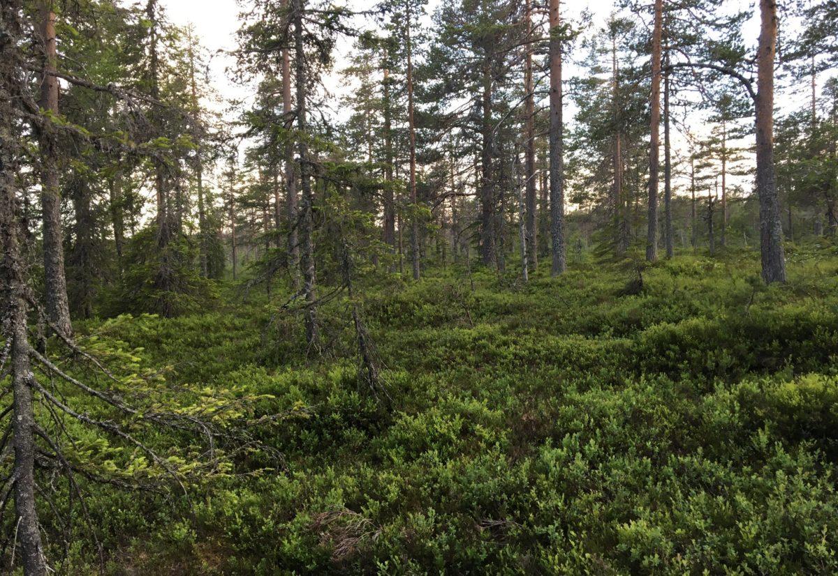 Skogsfuglprøven 2017
