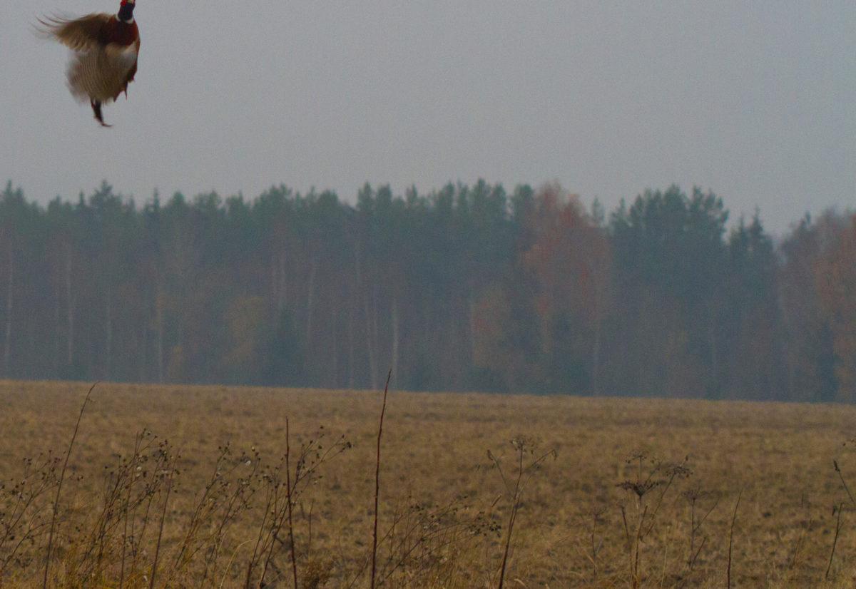 Distriktsmesterskap lavland NVK Hedmark/Oppland