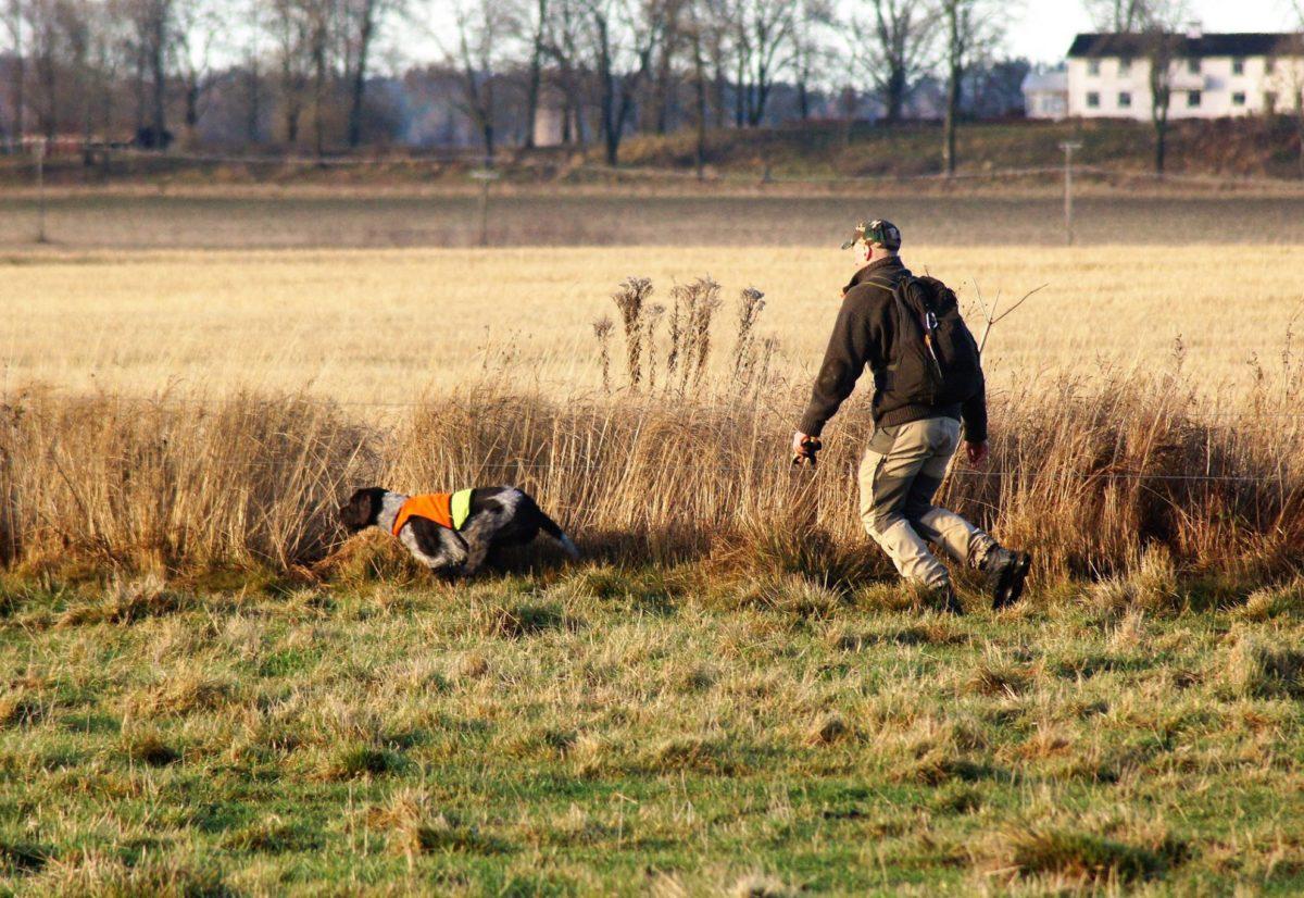 Deltakelse på svenske jaktprøver