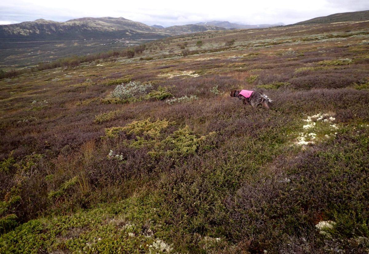 Dette er NVKs jaktprøver i høst