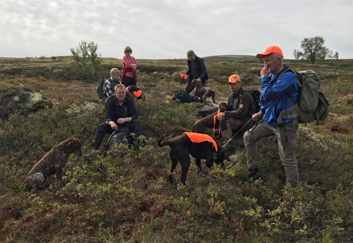 Er NM lag høyfjell noe for din hund?