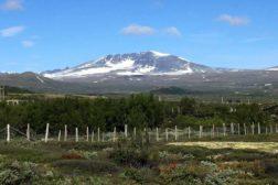 Tre vorstehere til Norsk Derby – så langt