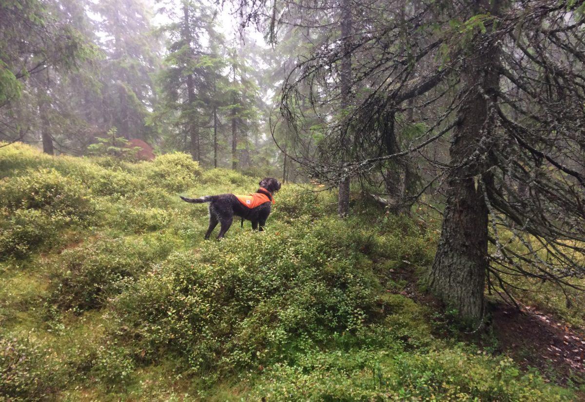 Meld på til NM skog