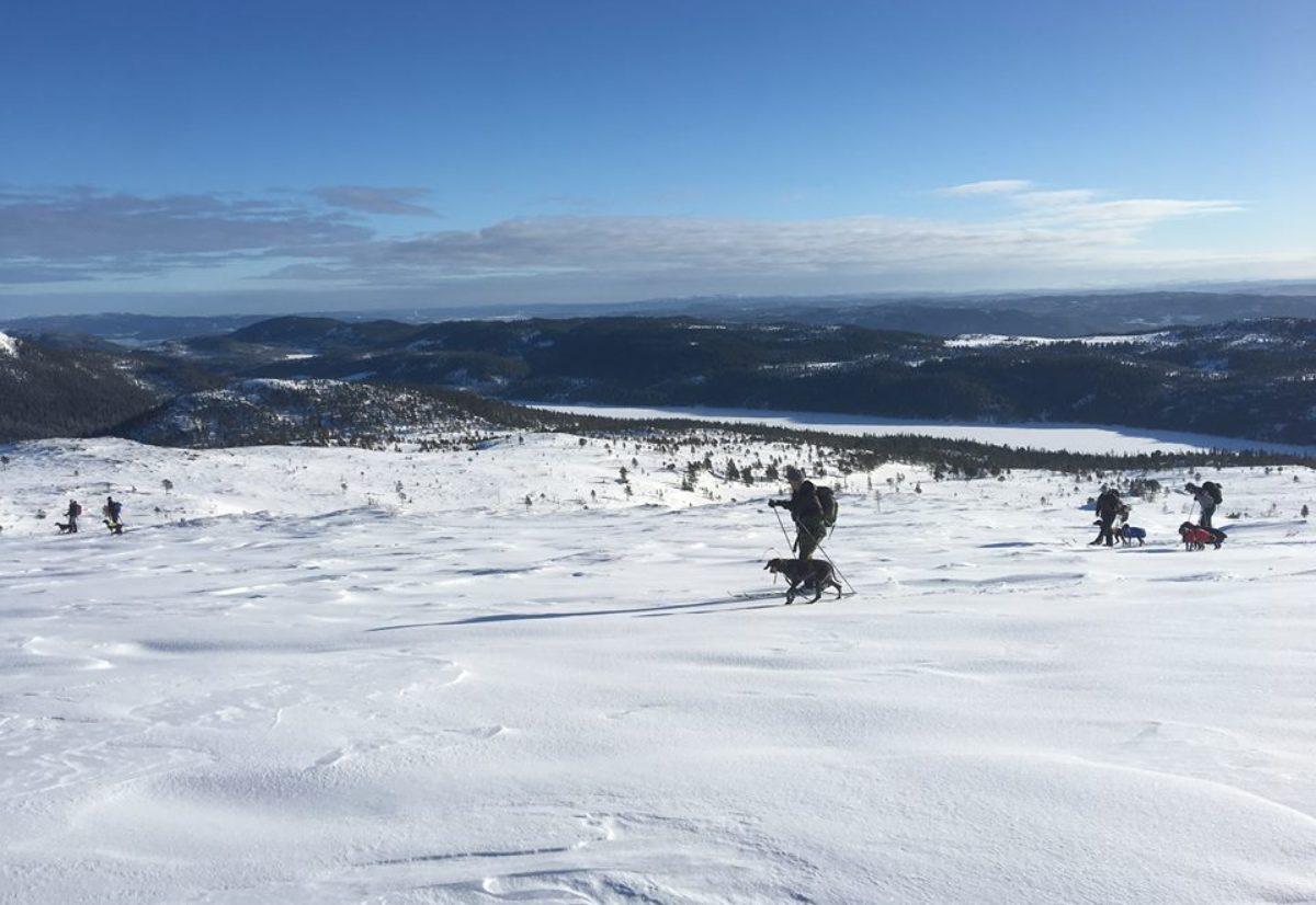 Rapport fra vintersamlingen/DM 2018