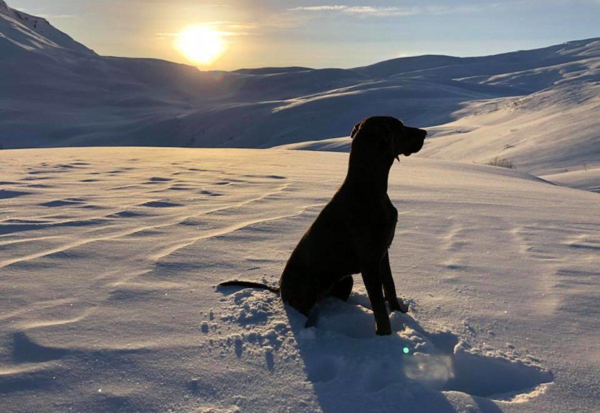 Flotte start på vintersesongen for Hordalandshundar
