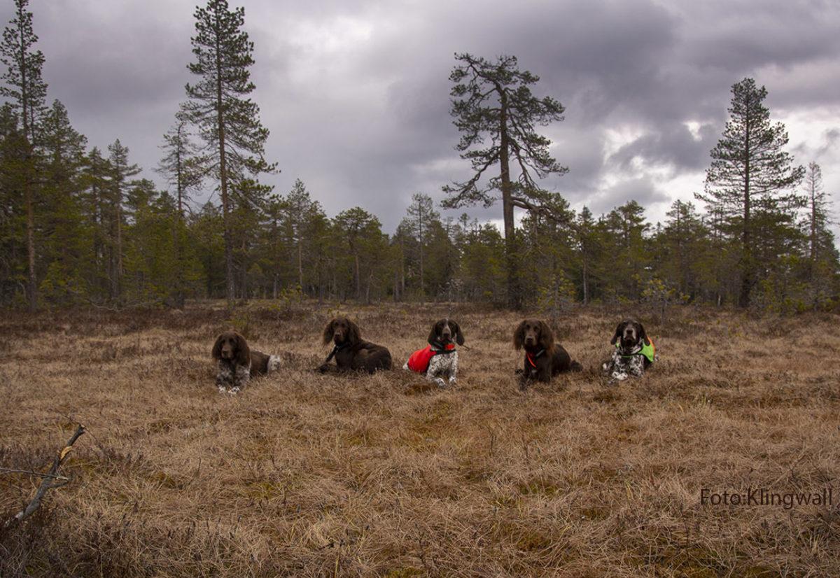 8 forskjellige raser påmeldt til NM skog