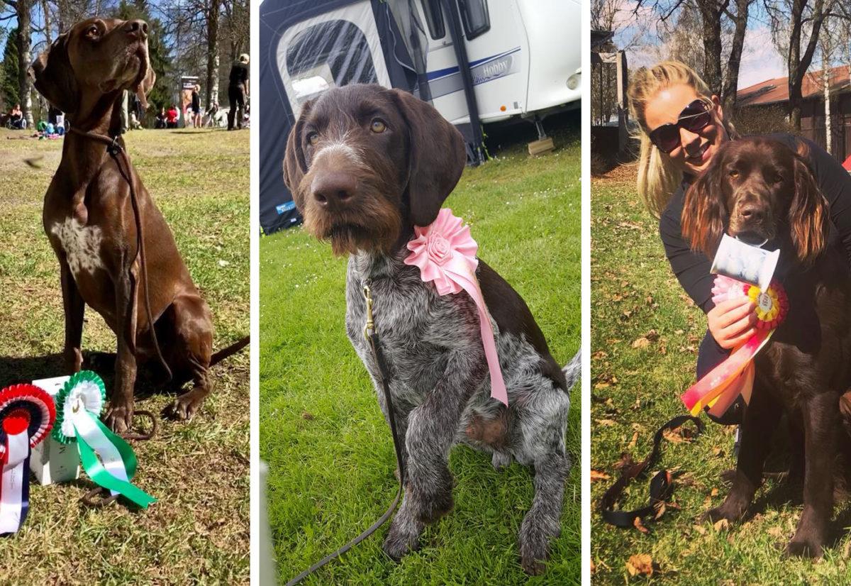 2018 Premierte hunder i Buskerud