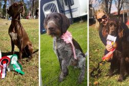 Premierte Buskerud-hunder i 2018