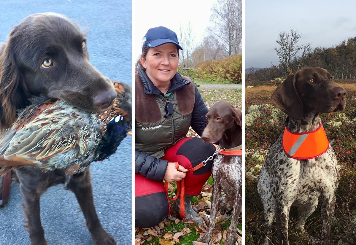 Savner du omtale av din hunds prestasjon?