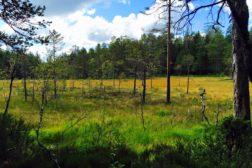 Skogsfuglprøve 26. aug.