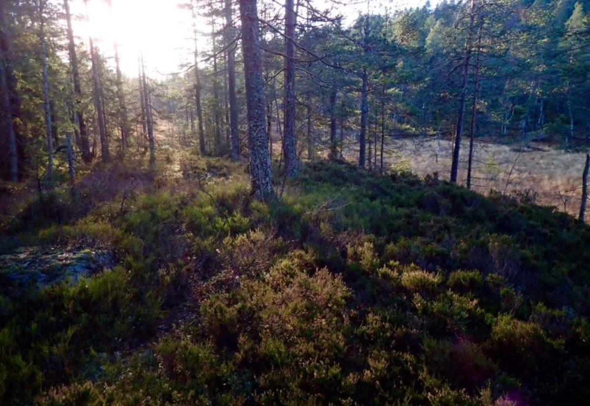 NM skog 2020 er fulltegnet!