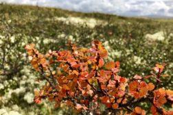 Høstsamling i fjellet for ferskinger