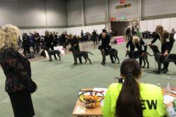 Flotte hunder og stolte eiere på Dogs4All 2018