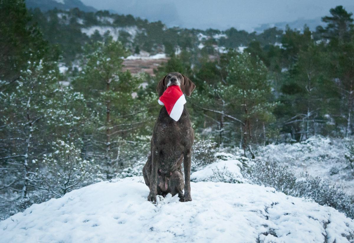 God jul frå oss i Hordalandsgruppen