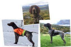 Hunder med 1. premie i Møre og Romsdal