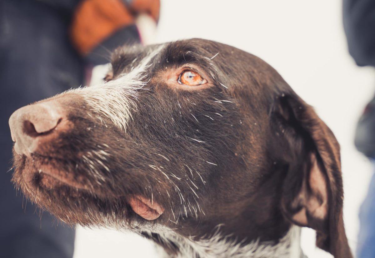Beethoven beste hund under NM lag