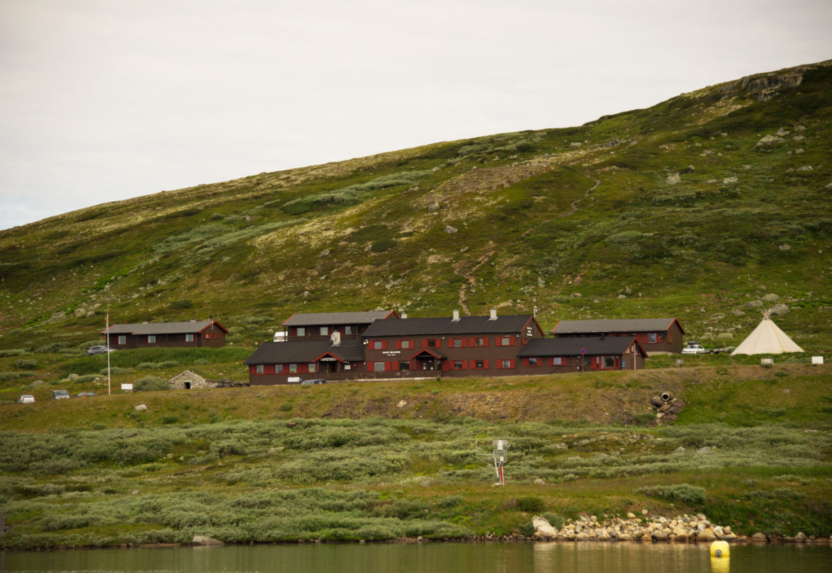 Fuglehundhelg på Hardangervidda