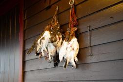 Fuglehundtrening i perioden 20. august til 10. september