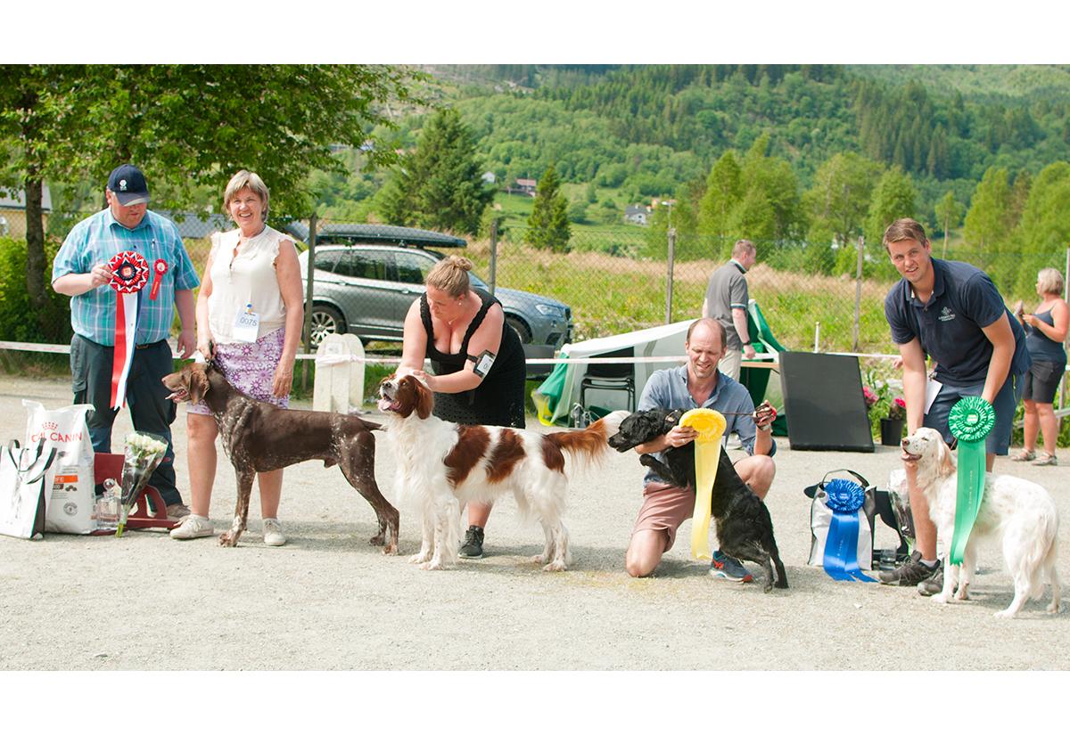 Vestlandets Fuglehundfestival