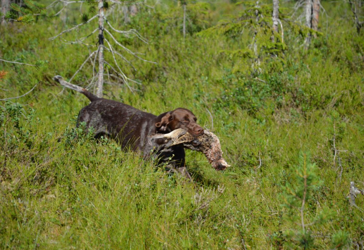 Fullkombinert skog og vanlig skogsfuglprøve under NM