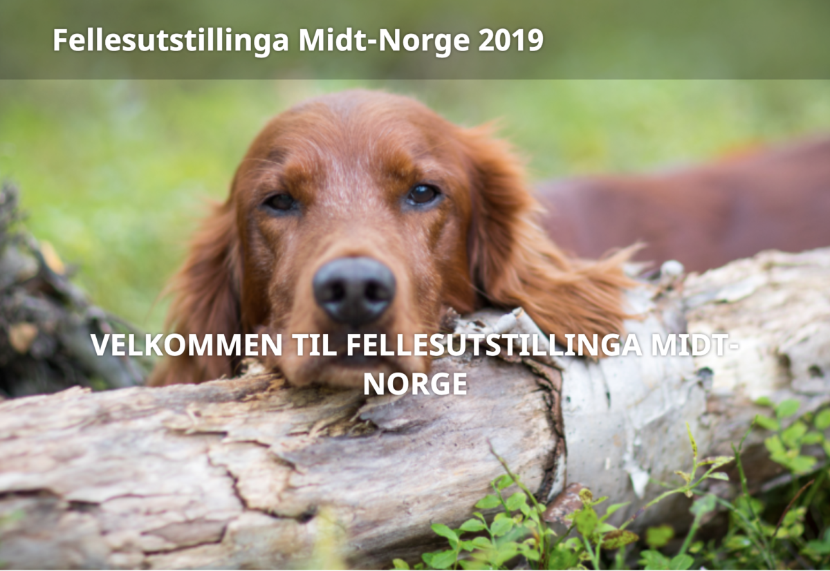 Fellesutstillinga i midt-norge 2019