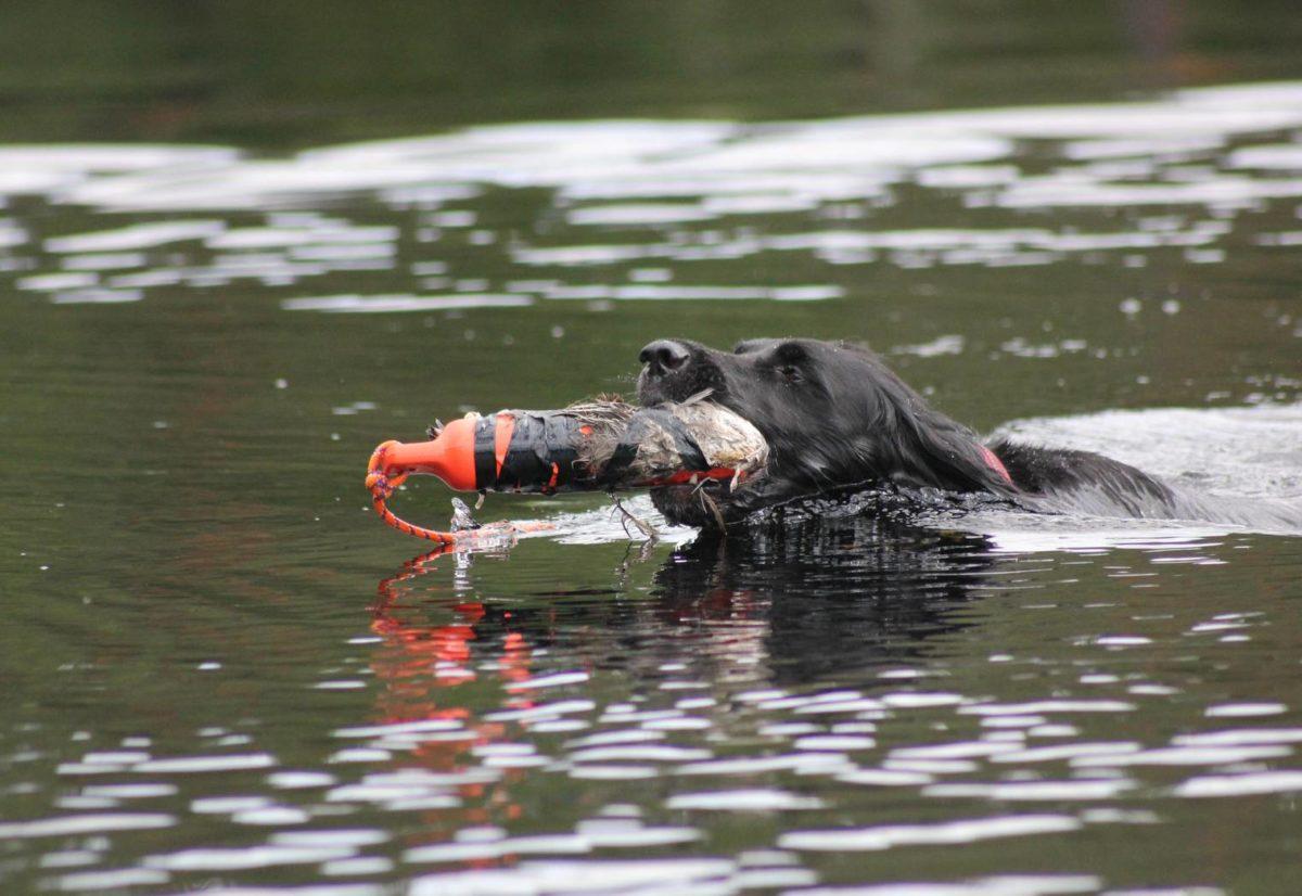 Vann- og sporprøvekurs i Molde