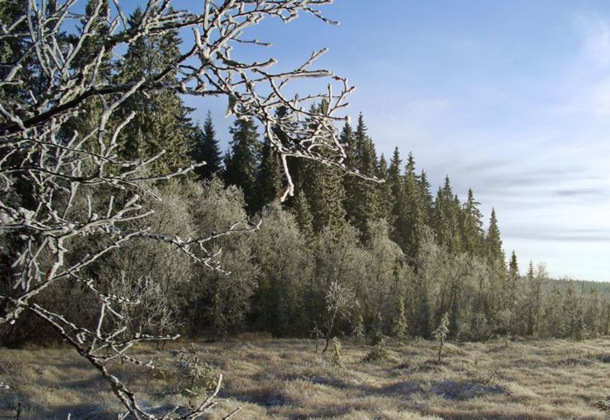 Ringsaker Skogsfuglprøve NVK Innlandet  31 Oktober – 1 November
