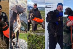 Årets hunder 2020, samlet i NVK og NVC