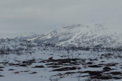 Vintersamling Hovden 19-21 februar